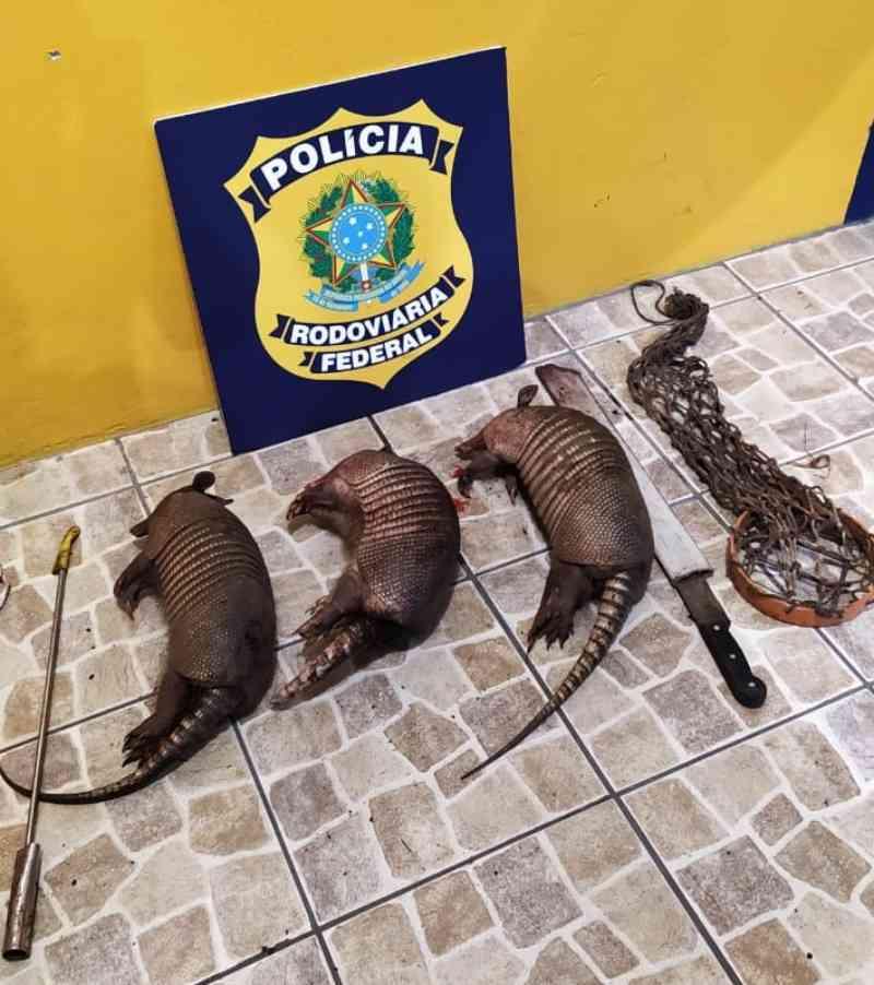 PRF apreende três tatus e caçadores vão responder por crime ambiental