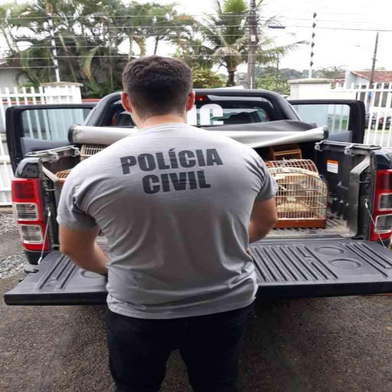 Homem é preso por comércio de aves silvestres em Joinville, SC