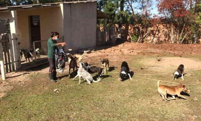 ONG cria campanha online em busca de recursos para manter abrigo de animais em Laguna, SC