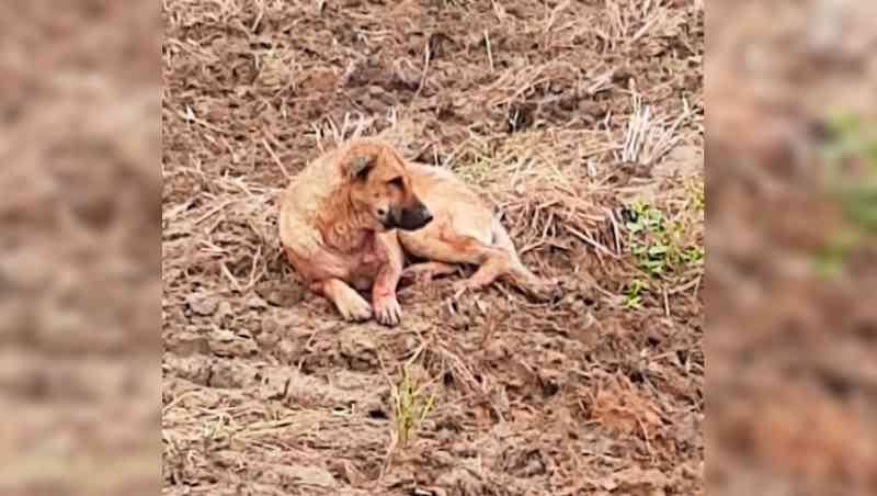 Cães em estado de maus-tratos são abandonados em Tijucas, SC