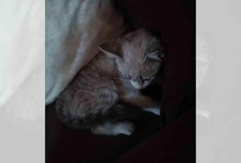 Moradora de Xanxerê (SC) salva seu gato de envenenamento no quintal da própria casa