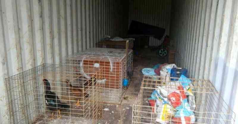 Polícia Ambiental de Araraquara (SP) apreende galos de rinha e cães e multa tutor em R$ 240 mil