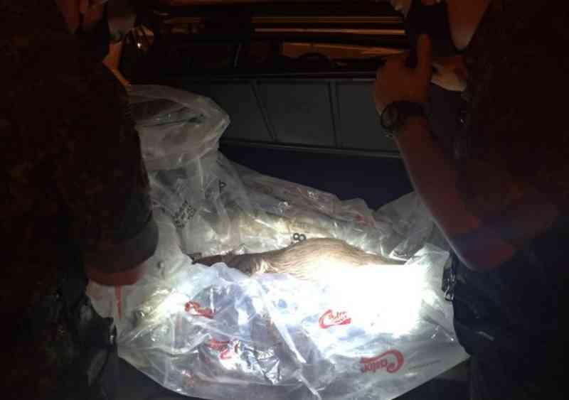 Dupla é presa após ser flagrada com capivara abatida e arma em Avaré, SP