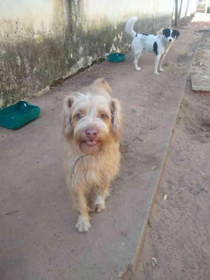 Animais abrigados no CCZ de Bauru (SP) precisam de doações de roupinhas e cobertores