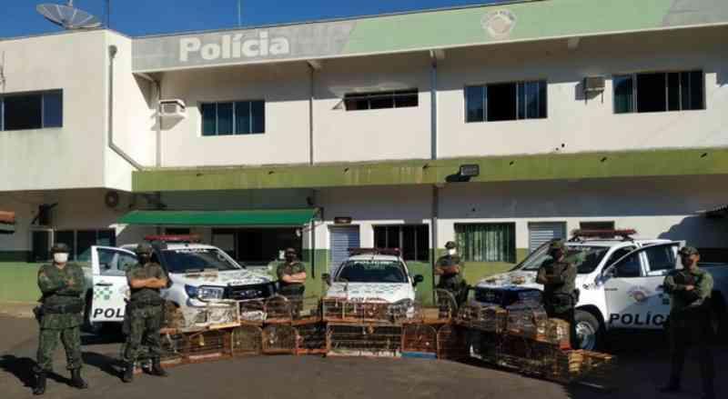 Polícia apreende aves silvestres e aplica multa milionária em Bauru, SP