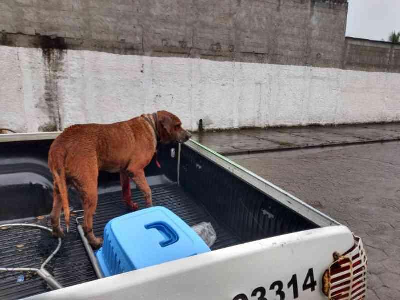 Cachorro é resgatado pela polícia após ser esfaqueado em Caraguatatuba, SP