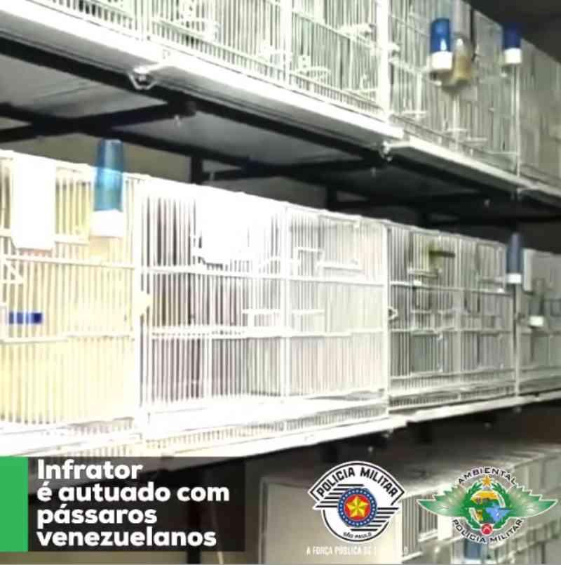 PM Ambiental apreende 18 aves exóticas venezuelanas mantidas em cativeiro em Carapicuíba, na Grande São Paulo