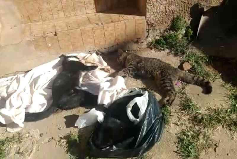 Animais são mortos por envenenamento em Franca, SP