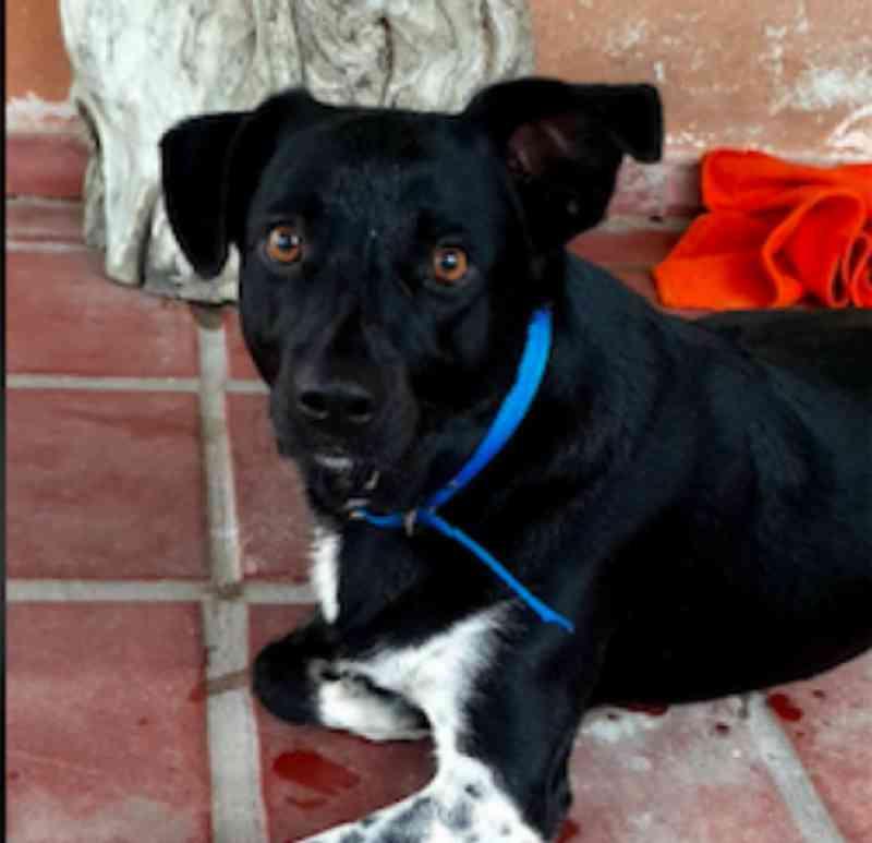 Prefeitura de Ilha Comprida (SP) e ONG fazem campanha de adoção de animais