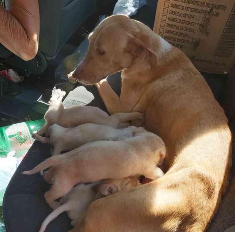Cães com sinais de maus-tratos e vítimas de abandono são resgatados em bairros de Rio Preto, SP