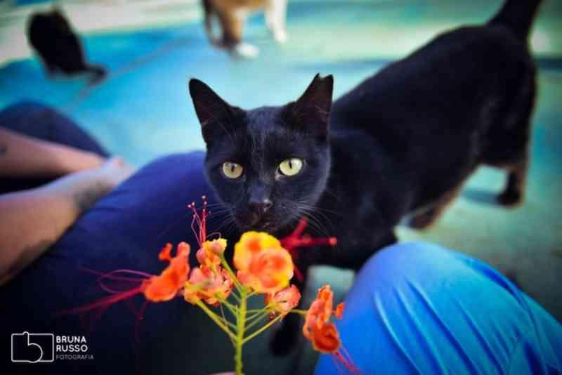 Amigas se mobilizam para ajudar mais de 100 gatos que vivem em cemitério de Sorocaba, SP