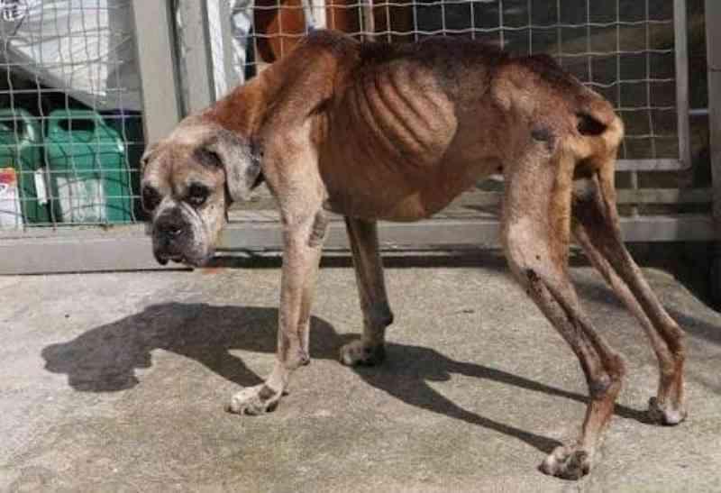 29 cachorros em situação de maus-tratos são resgatados em Tupã, SP