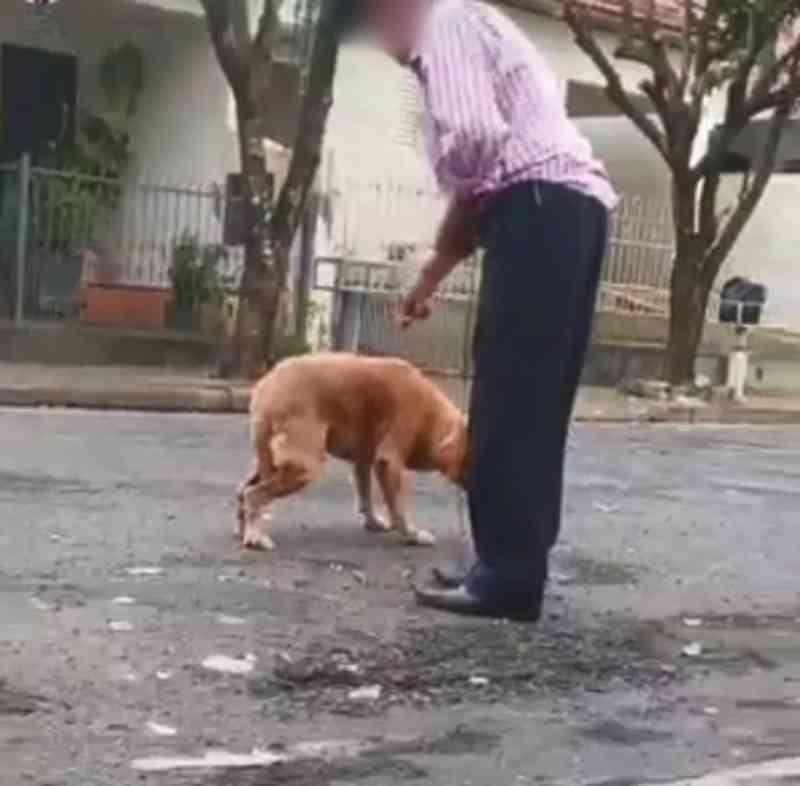 Cachorro é agredido com corda e puxado por idoso no meio da rua em Urupês (SP); veja o vídeo