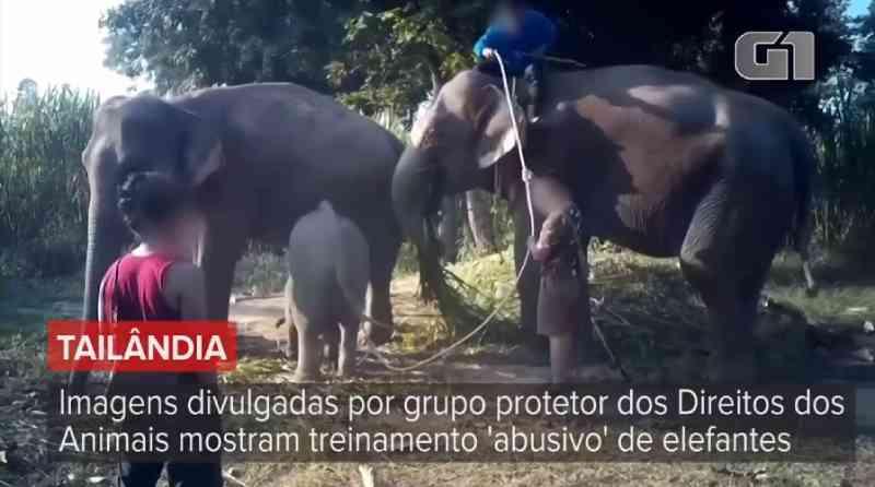Entidade denuncia tratamento cruel de elefantes na Tailândia