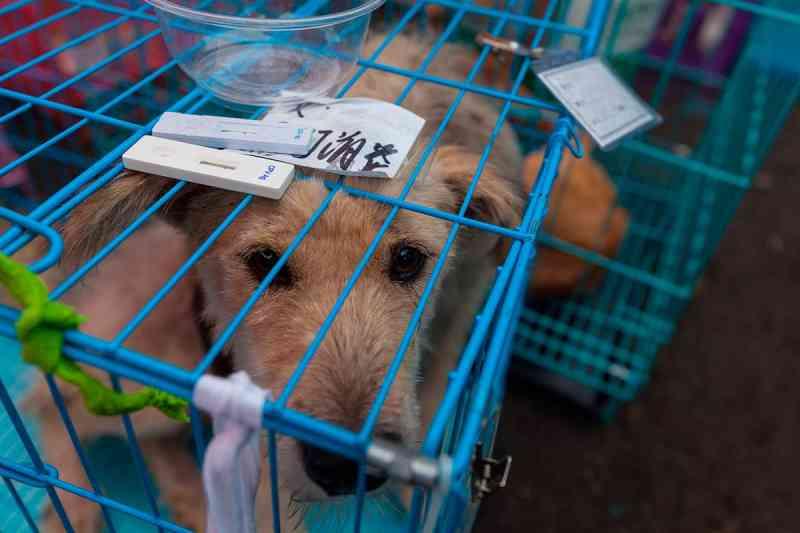 Ativistas chineses resgatam filhotes de cães que seriam vendidos no Festival de Yulin