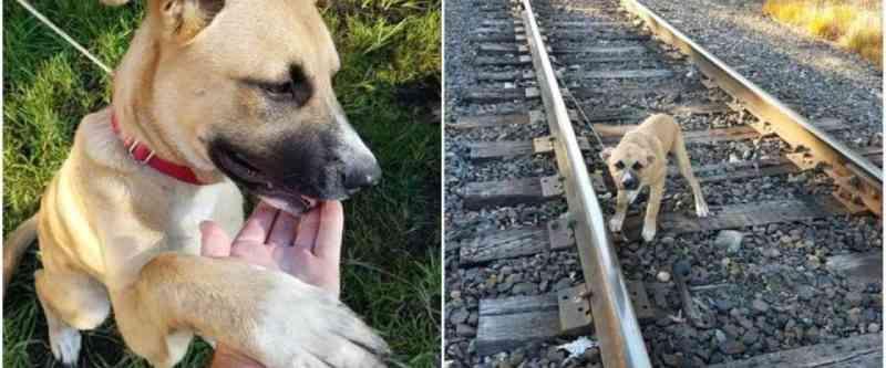 Cachorro visto amarrado a trilho de trem é resgatado e adotado