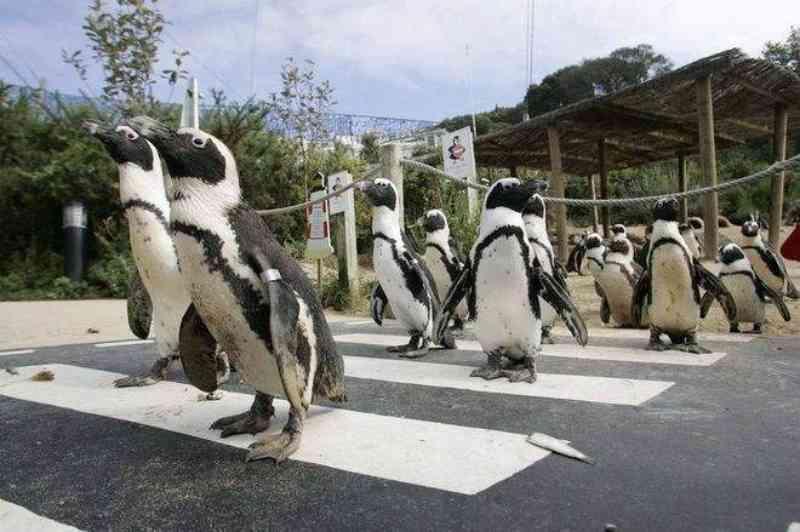 Zoológico vai sacrificar animais caso não encontrem um novo lar para eles