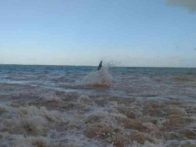 Banhistas encontram animal encalhado em Alagoas, e Biota suspeita de baleia reintroduzida