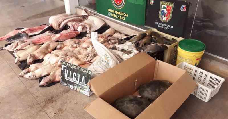 Embarcações são apreendidas com animais silvestres abatidos em Manaus, AM