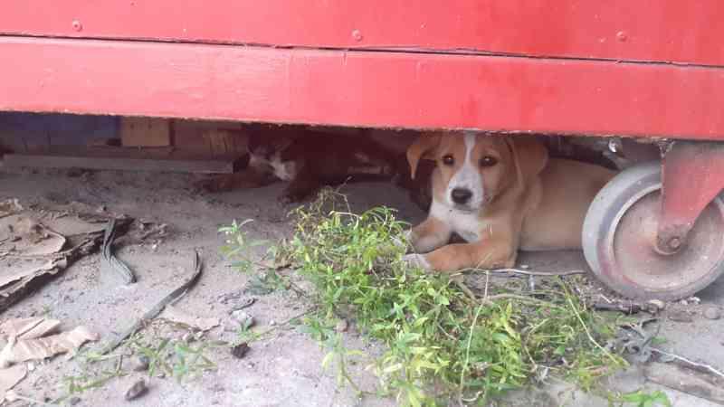 Animais são abandonados em feira no Nova Cidade, em Manaus, AM