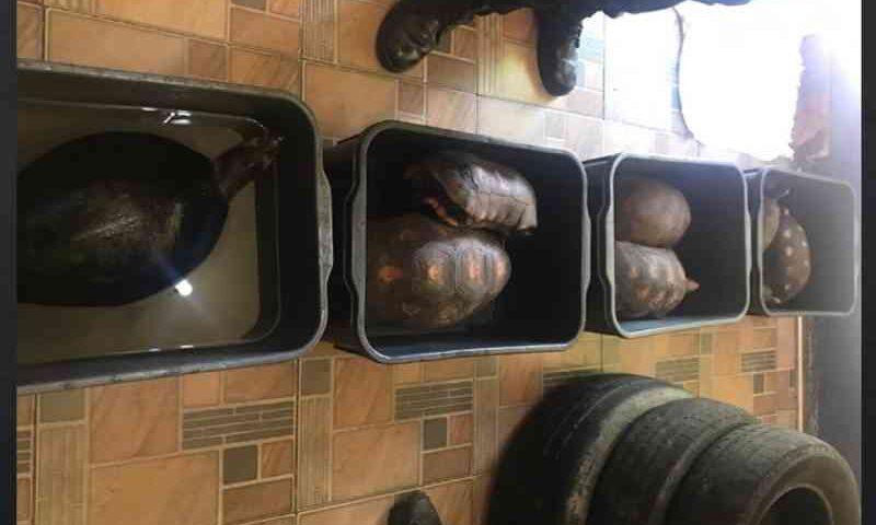 Animais silvestres mantidos em residência de luxo são resgatados durante ação da PF; suspeito foi preso