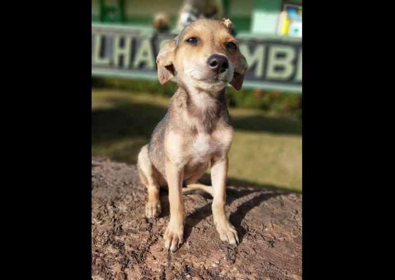 Policiais mobilizam campanha de adoção para 20 cães que 'moram' em quartel no Amapá