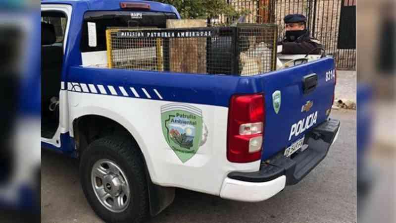 Polícia e ativistas resgatam buldogues de criadouro clandestino em Córdoba, Argentina