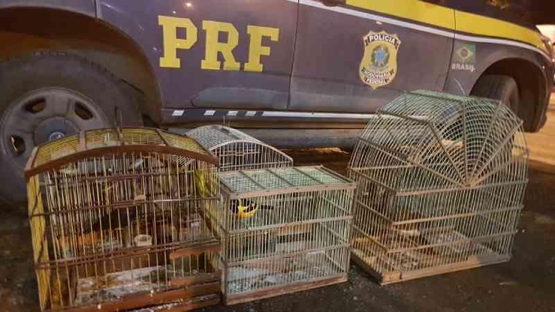 Mais de 130 animais silvestres e exóticos aprisionados e em situação de maus-tratos são resgatados durante operação na Bahia