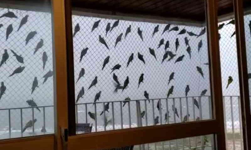 VÍDEO: aves se abrigam em tela de apartamento no sul da BA após retirada de árvores em avenida; MP aciona prefeitura