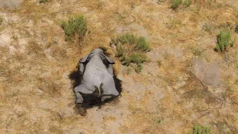O mistério dos 350 elefantes mortos no Botsuana