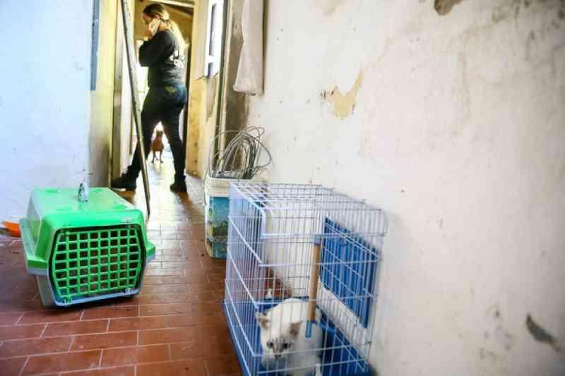 Polícia investiga castração ilegal de animais em pet shop de Fortaleza, CE; dona é levada à delegacia