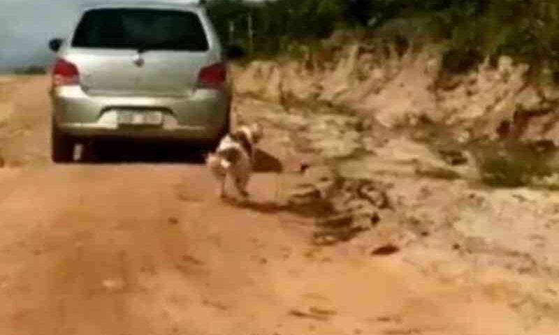 Cachorro é amarrado em carro e arrastado pela estrada no Ceará