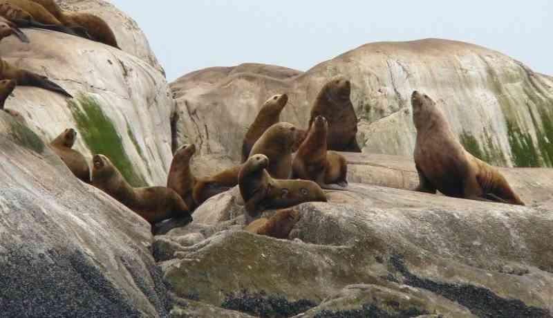 Leões-marinhos decapitados estão a dar à costa no Canadá (e ninguém sabe o porquê)