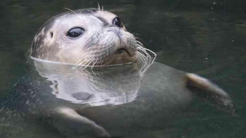 Turistas golpeiam uma foca para que crianças pudessem tirar fotos com ela