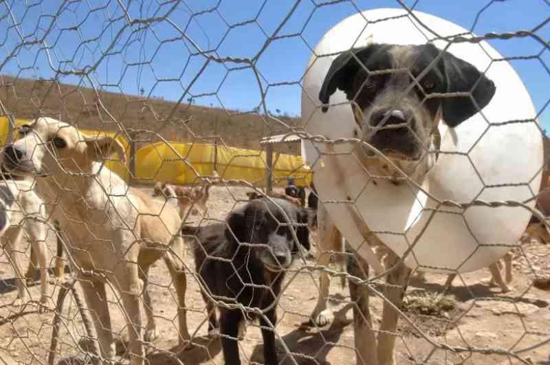 Cachorro tem focinho e patas amarrados com arame e é espancado até a morte em Ceilândia, DF