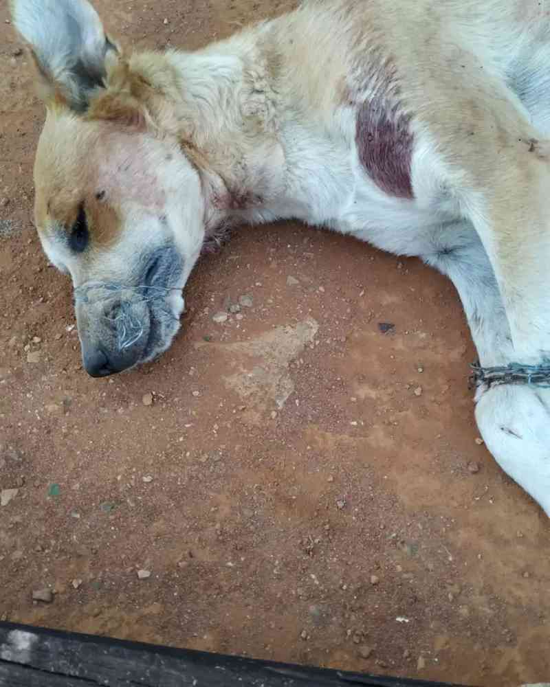 Cão é morto a facadas em suposto ritual no DF