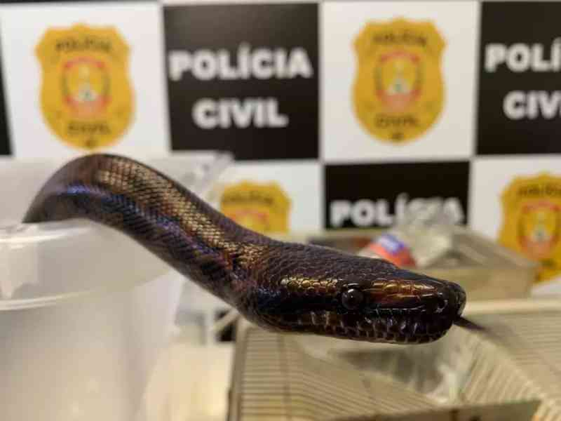 Servidor do Judiciário é detido após esconder cobra e ratos; veja vídeo