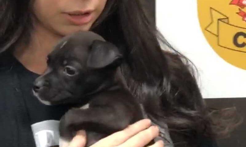 Cão resgatado após maus-tratos no DF — Foto: Polícia Civil/Divulgação