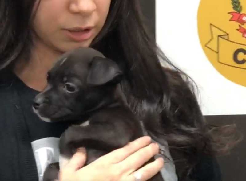 Jovem é detido após dar lança-perfume para cachorro adotado no DF