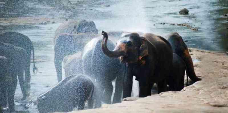 Dinamarca compra elefantes restantes em circos para libertá-los e cuidar deles