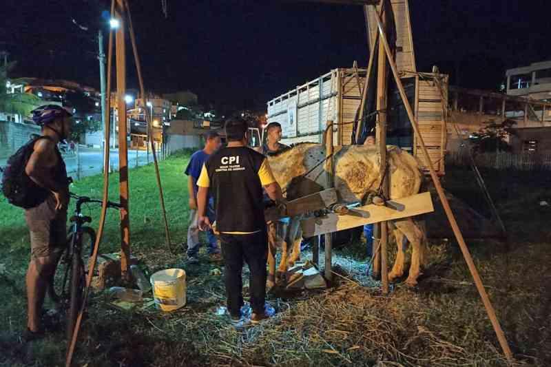 CPI resgata cavalo à beira da morte em Cariacica, ES