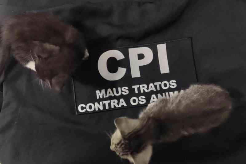 CPI resgata gatos vítimas de maus-tratos no ES