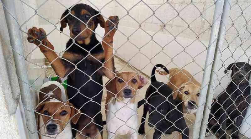 Mais de 70 cães e gatos ganharam novos lares em junho em Vila Velha, ES