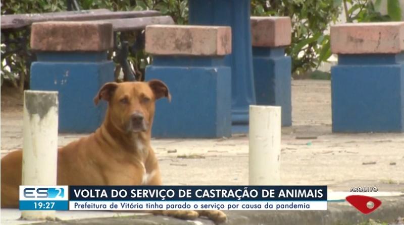 Serviço de castração de animais é retomado em Vitória, ES