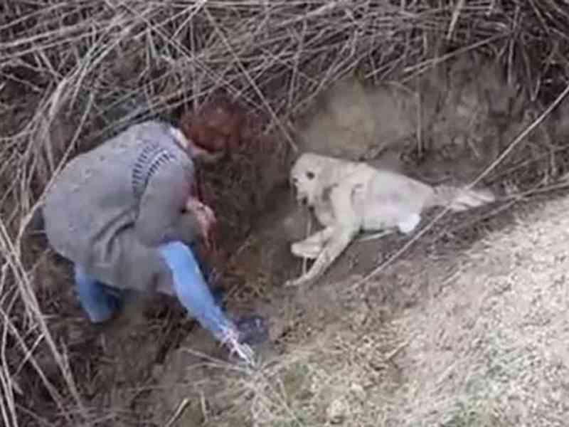 Cachorro é enterrado vivo; veja como ele foi resgatado