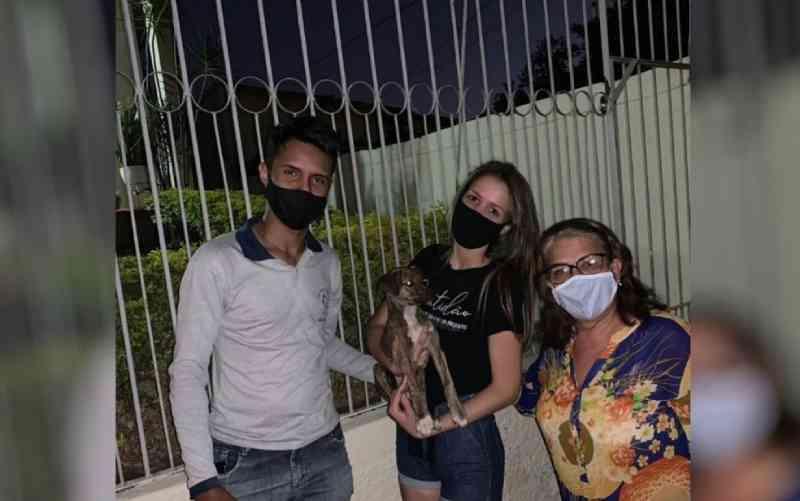 Cachorro que foi jogado por mulher em casa de Anápolis (GO) é adotado por casal: 'Agora tem uma família como merece'