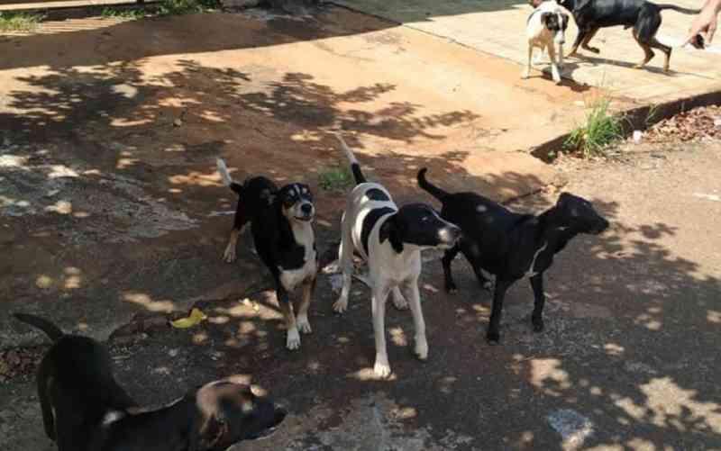 Moradora denuncia que 12 cães foram abandonados depois que tutores se mudaram de casa, em Itumbiara, GO