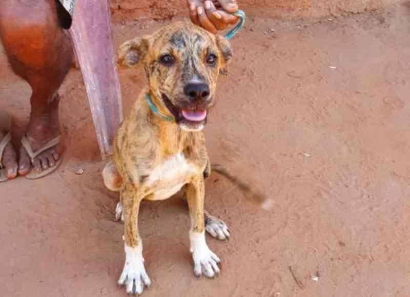 Filhote de cachorro que sofria maus-tratos é resgatado pela polícia de João Lisboa, MA