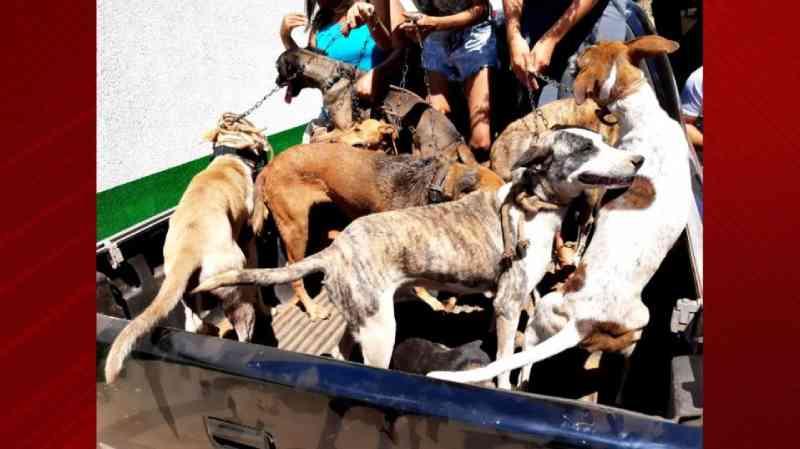 Cachorros que sofriam maus-tratos são resgatados de cativeiro em residência no Maranhão