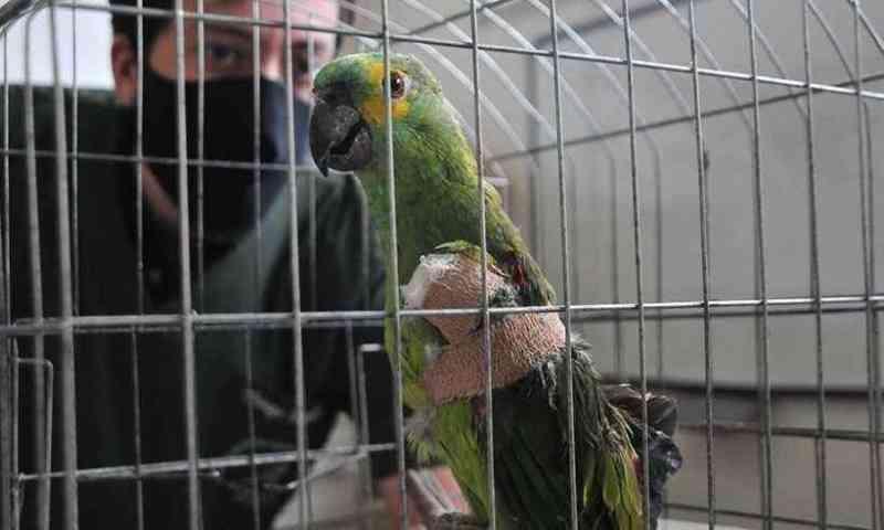 Linhas cortantes já feriram mais de 60 animais em Belo Horizonte (MG) neste ano